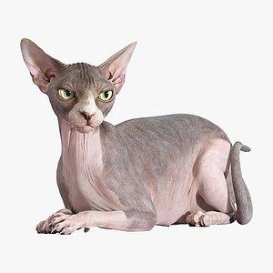3D sphynx cat lying