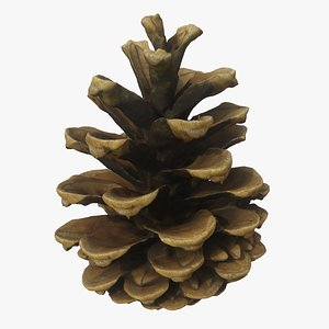 3D Fir Cone 6 model
