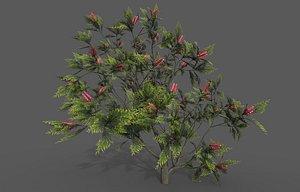 3D Grevillea Plant model
