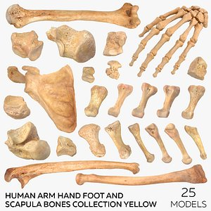 Human Arm Hand Foot and Scapula Bones Collection Yellow - 25 models 3D model
