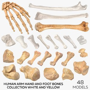 3D Human Arm Hand and Foot Bones Collection White and Yellow - 48 models model