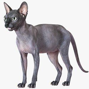 3D sphynx cat