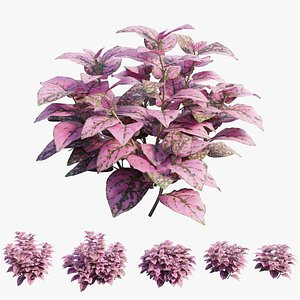 pink polka dot plant model