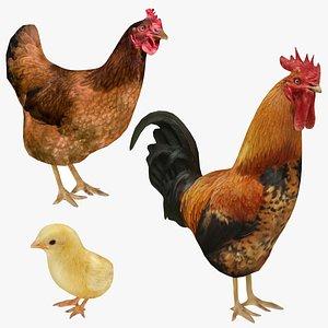 chicken chick 3D model