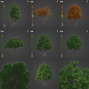 2021 PBR Sessile Oak Collection - Quercus Petraea 3D model