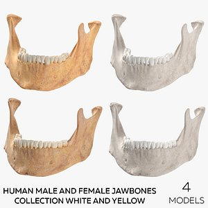 Human Male and Female Jawbones Collection White and Yellow - 4 models 3D model