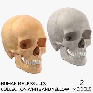 3D Human Male Skulls Collection White and Yellow - 2 models model