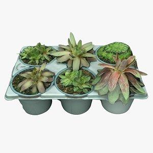Plant 04 3D model