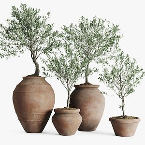 set olive trees antique 3D model