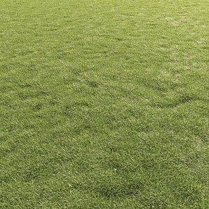 Lawn Grass 01 3D model