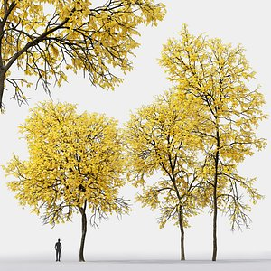 tree ash ash-tree 3D model