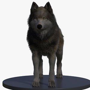 Wolf XGEN 3D model