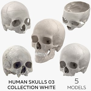 Human Skulls 03 Collection White 3D model