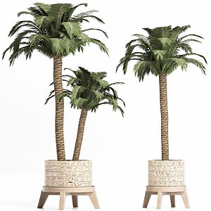 3D model palm tree egyptian