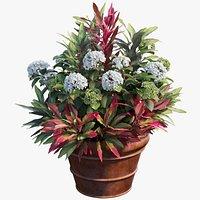 Hydrangea in planters set 06