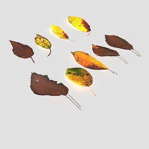 dry leaves pack 3D model