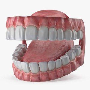 3D Mouth model