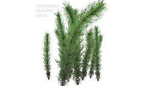 underwater grass water 3D model