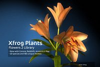 2020 XfrogPlants Flowers 2 Library