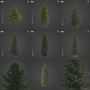 2021 PBR Oriental Spruce Collection - Picea Orientalis 3D model