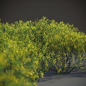 3D XfrogPlants Cresote Bush - Larrea Tridentata