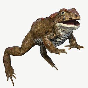 toad boreal 3d model