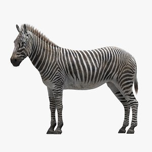 Zebra RIGGED 3D model