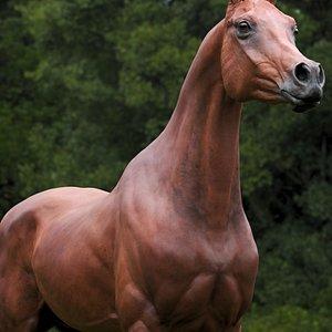 3D horse arabian BROWN Zbrush model