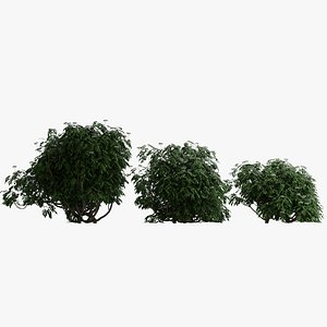 3D model bushes person leaf