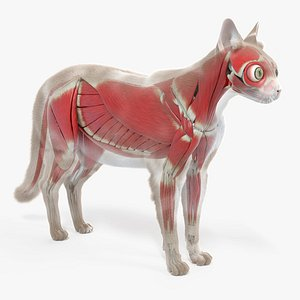 cat body skeleton muscles 3D