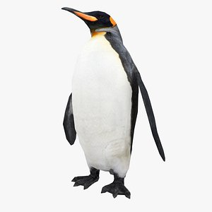 3D penguin king
