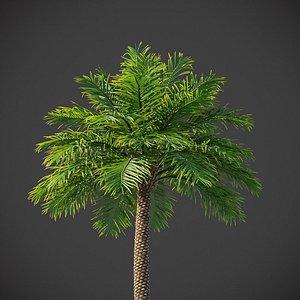 3D XfrogPlants Phoenix Dactyliera - Date Palm model