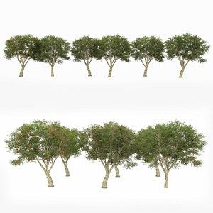 optimized 6 model