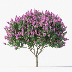 3D model Crape myrtle No 2 with flowers