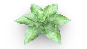 Leafy Plant 3D model