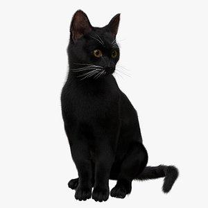 Black Cat xgen Rigged 3D model