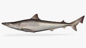 3D school shark