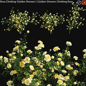 Rosa Climbing Golden Showers - rose 01 3D model