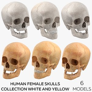 Human Female Skulls Collection White and Yellow - 6 models 3D