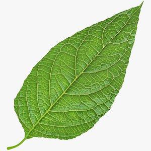 3D Birch Leaf V1 model