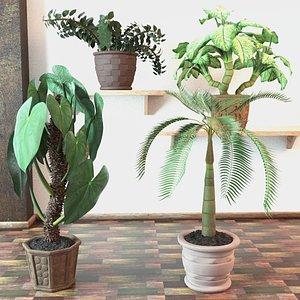 3D model plants pot palm