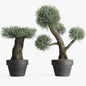 3D formed olive trees