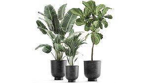 plants flowerpot 3D
