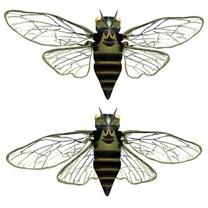 Fully rigged low poly cicada 3D model