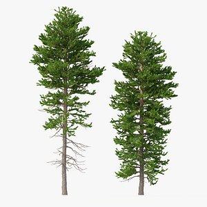 3D Picea Abies Set 1 - 2 in 1