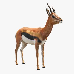 3D gazelle mammal wildlife