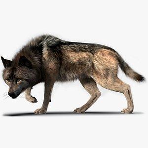 Wolf FUR Rigged 3D model