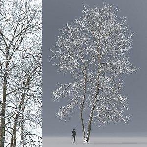 tree ash winter 3D