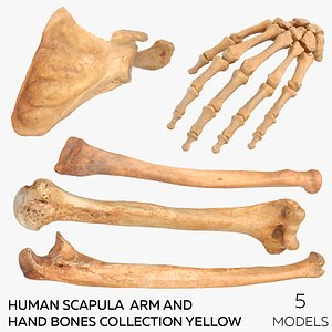3D Human Scapula  Arm and Hand Bones Collection Yellow - 5 models model
