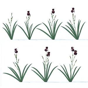 3D iris plant flower model